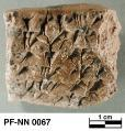 Persepolis Fortification tablet NN 0067